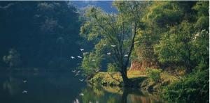 rio-colima-mexico