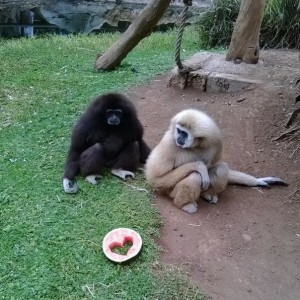 reino_anima_renerife_animales__enboga
